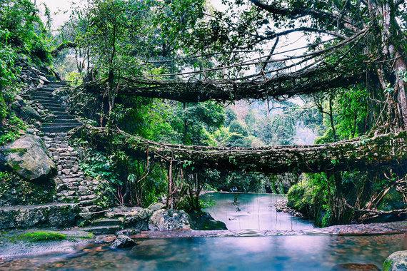 Shutterstock.com nuotr./Medžių šaknų tiltai Indijoje