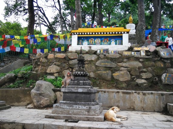 G.Juocevičiūtės nuotr./Nepalo miestuose šunys parkų ir šventyklų teritoriją dalijasi su beždžionėmis