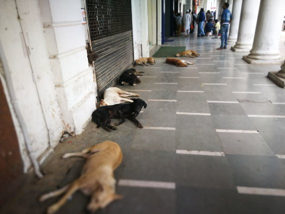 G.Juocevičiūtės nuotr./Pačiame Delio centre šunys apgulę gatves ir įėjimus į parduotuves bei viešbučius