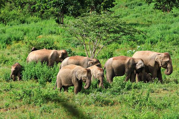 Shutterstock.com nuotr./Kuiburio nacionalinis parkas