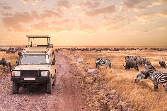 Shutterstock.com nuotr./Afrikos safario turai