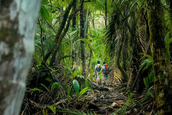 Shutterstock.com nuotr./Korkovado, Kosta Rika