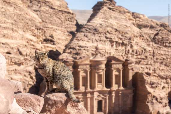 Petros Vienuolyno katinas (nuotr. Giedriaus Akelio, spot-on.lt )