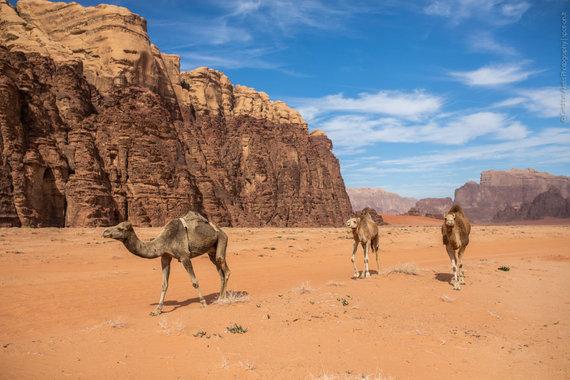 Vadi Rumo kupranugariai (nuotr. Giedriaus Akelio, spot-on.lt )