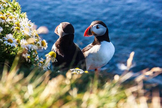 Shutterstock.com nuotr./Latrabjarg uola, Islandija