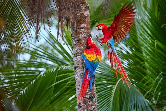 Shutterstock.com nuotr./Manu nacionalinis parkas, Peru