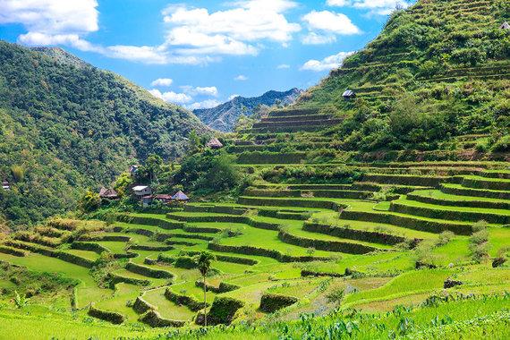 Shutterstock.com nuotr./Filipinų Kordiljerų ryžių terasos