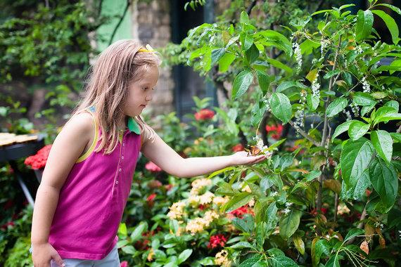 Shutterstock.com nuotr./Singapūro oro uosto drugelių sodas