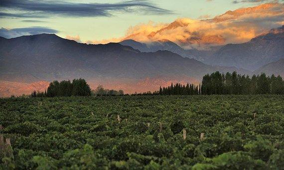 Shutterstock.com nuotr./Argentina, Mendosos miestas