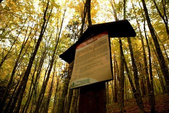 """Ramūno Šukausko/""""Nesėdėk namuose"""" nuotr./Trako miško gamtos pažinimo takas"""