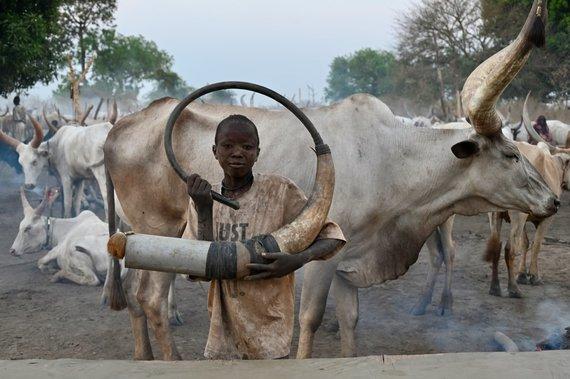 D.Pankevičiaus nuotr./Mundari berniukas pučia į ragą ir kviečia gyvulius grįžti į stovyklą nakčiai