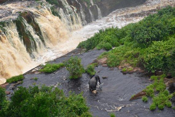 Lee White/UNESCO nuotr./Gabonas: Ivindo nacionalinis parkas