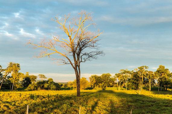 Shutterstock.com nuotr./Pantanalio draustinis