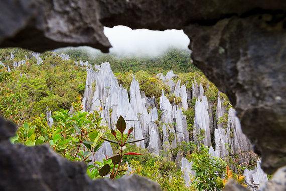 Shutterstock.com nuotr./Gunung Mulu nacionalinis parkas