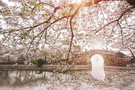 Shutterstock.com nuotr./10. Usis, Kinija