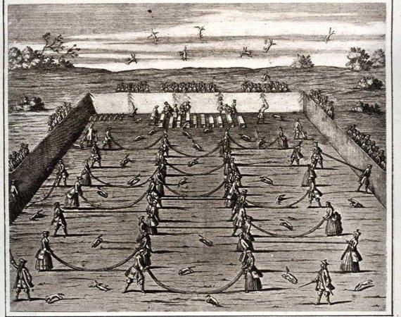 """""""Lapės mėtymas"""" XVIII a. pradžios Saksonijoje"""