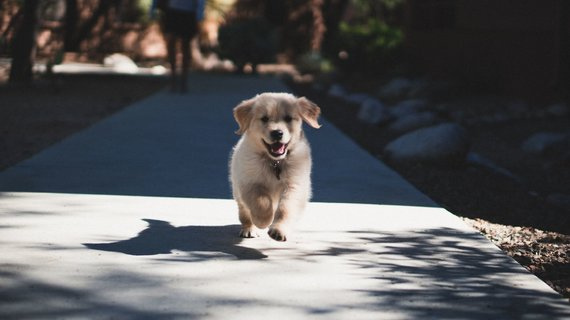 """""""PetCity"""" nuotr./Šuniukas"""