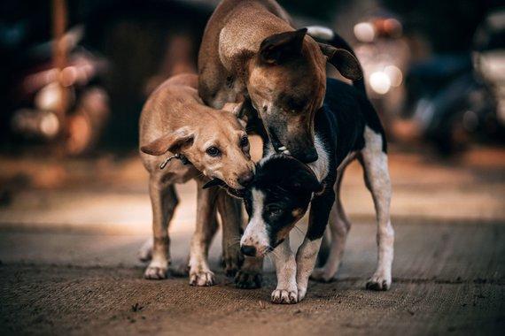 """""""PetCity"""" nuotr./Gyvūnai iš prieglaudos"""