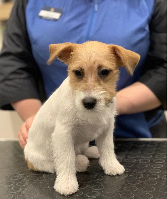 """""""PetCity"""" nuotr./""""PetCity"""" kirpėjos-šunų priežiūros specialistės Ingridos Vaitiekauskaitės klientas"""