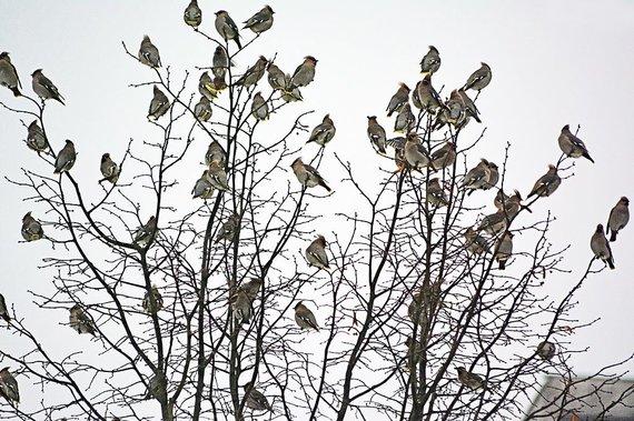 Vytauto Šauklio nuotr./Žiemos vaizdai Vytauto Šauklio fotografijose