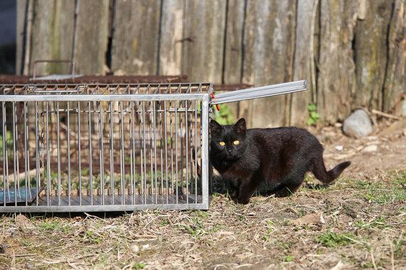 Matas Miežonis / 15min nuotr./Sterilizacijai gaudomos benamės katės