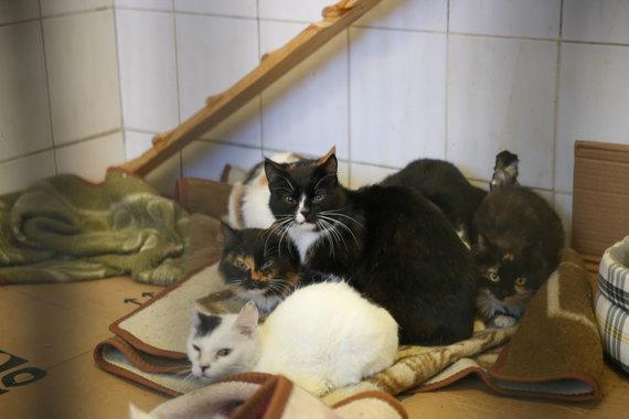 Matas Miežonis / 15min nuotr./Katės Vilniaus gyvūnų globos namuose
