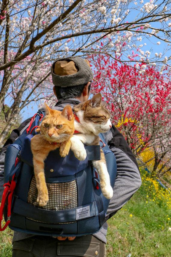 """""""Scanpix""""/""""Caters News Agency"""" nuotr./Su šeimininku keliaujančios katės"""