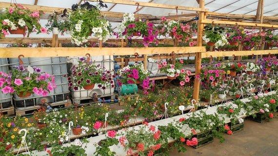 Asmeninio archyvo nuotr./Didžiausias Marijampolės regiono gėlių ūkis