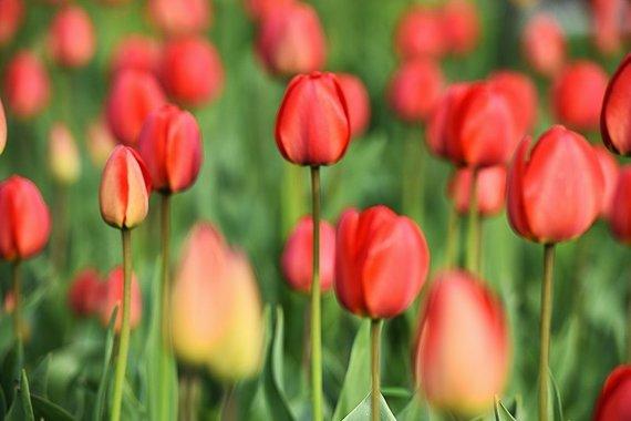 Vytauto Šauklio nuotr./Pavasarinių žiedų ir gamtos grožis