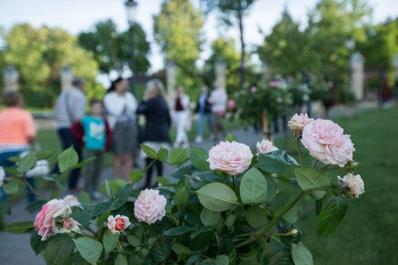 Rožių apsuptoje Chaimo Frenkelio viloje prasideda vasaros festivalis