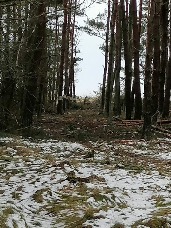 Skaitytojo nuotr./Lietuvos pareigūno žemės sklype Papėje išpjauti medžiai