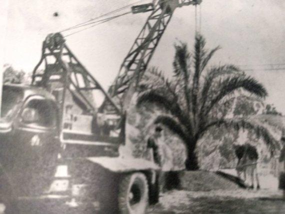 """Ugniaus Antanavičiaus nuotr./Palmė Jaunimo sode 1955 m., perfotografuota iš """"Švyturio"""" žurnalo"""