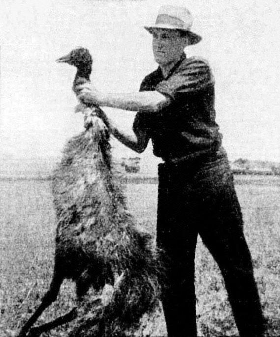 Wikimedia Commons / Public Domain nuotr./Paukštis, nukautas per emu karą