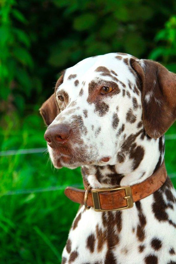 123RF.com nuotr./Šuo su atkakliu