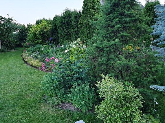 Asmeninio archyvo nuotr. /Jolantos Voroneckajos namų kiemo augalai