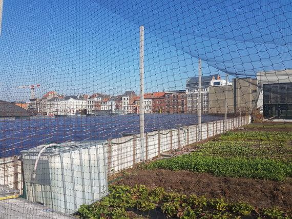 15min nuotr./Briuselio Anderlechto rajone ant stogų – ir saulės baterijos, ir daržai
