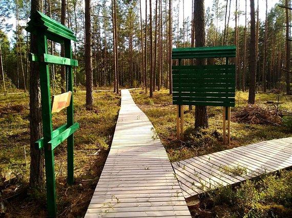 Miško parkas šalia Paaisetės II