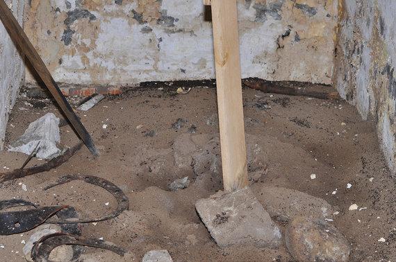 W.Stephano nuotr./Įtaisius išlipimo lentą bunkerio skruzdžių kolonija netrukus išnyko – liko tik neišgyvenusių vabzdžių kapinės prie sienų