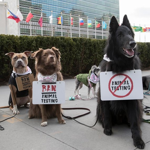 "Andrew Kelly/ ""The Body Shop"" nuotr./Protestas dėl bandymų su gyvūnais"