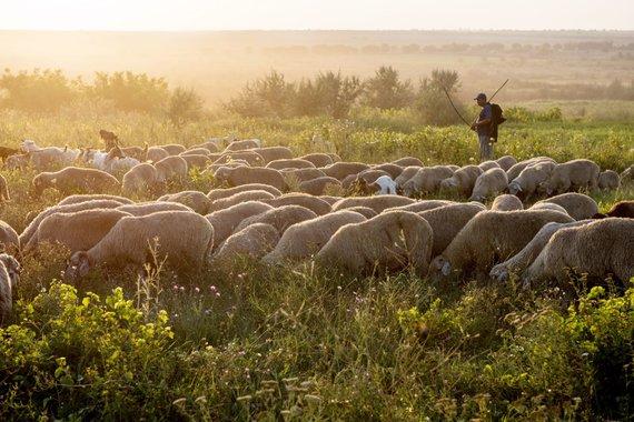 """Kelionių organizatoriaus """"GRŪDA"""" nuotr./Moldovos gamta"""
