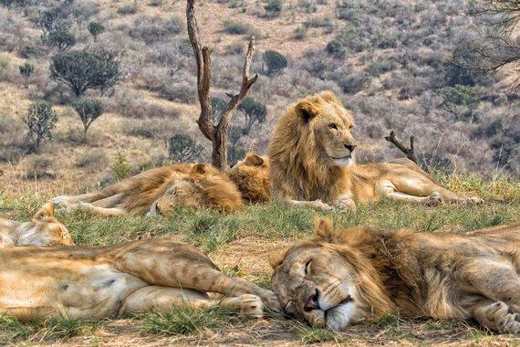 """Kelionių organizatoriaus """"GRŪDA"""" nuotr./Kriugerio nacionalinis parkas, Pietų Afrikos Respublika"""