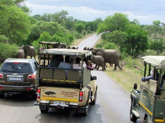 """Kelionių organizatoriaus """"GRŪDA"""" nuotr./Safaris Kriugerio nacionaliniame parke, Pietų Afrikos Respublika"""