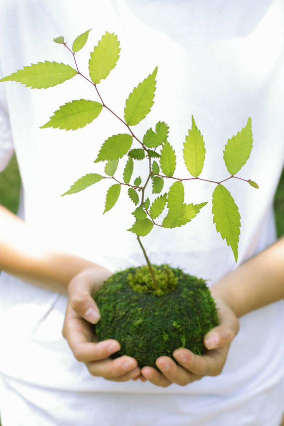123RF.com nuotr./Kokedama būdu pasodintas augalas