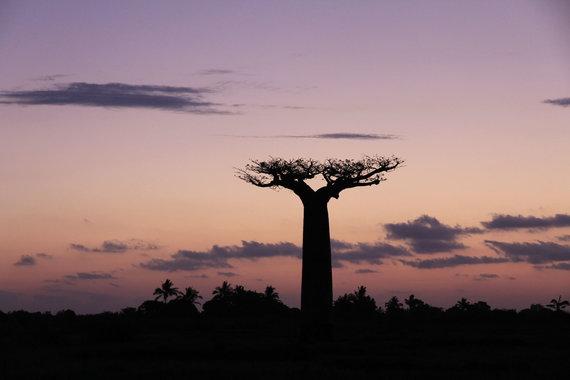 """Kelionių organizatoriaus """"GRŪDA"""" nuotr. /Baobabas"""