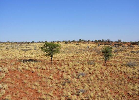 """Kelionių organizatoriaus """"GRŪDA"""" nuotr. /Kalahario dykuma"""