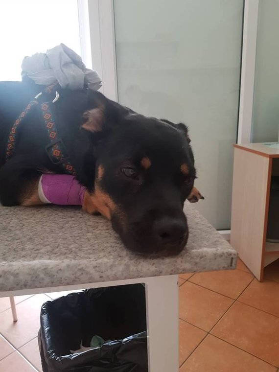 Mindaugo Anusausko šuo Čilė