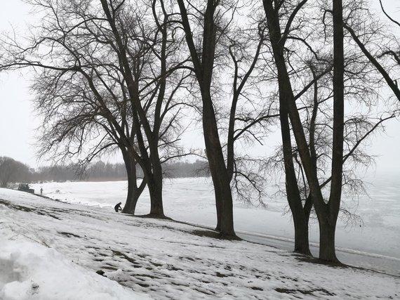 Prie Vievio ežero iškirsto tuopos