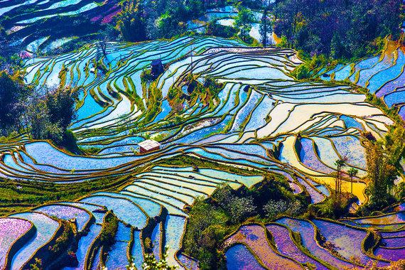Shutterstock nuotr./Juanjango ryžių terasos, Kinija
