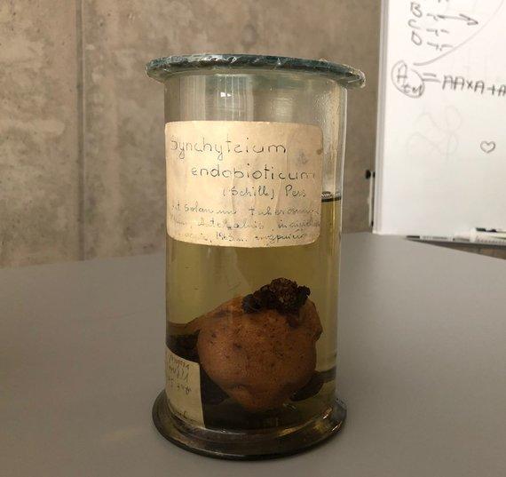 Vaikų universiteto paskaita apie grybus