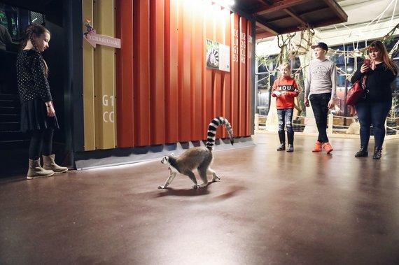 Partnerio nuotr./Netradicinio ugdymo galimybės – pamoka zoologijos sode